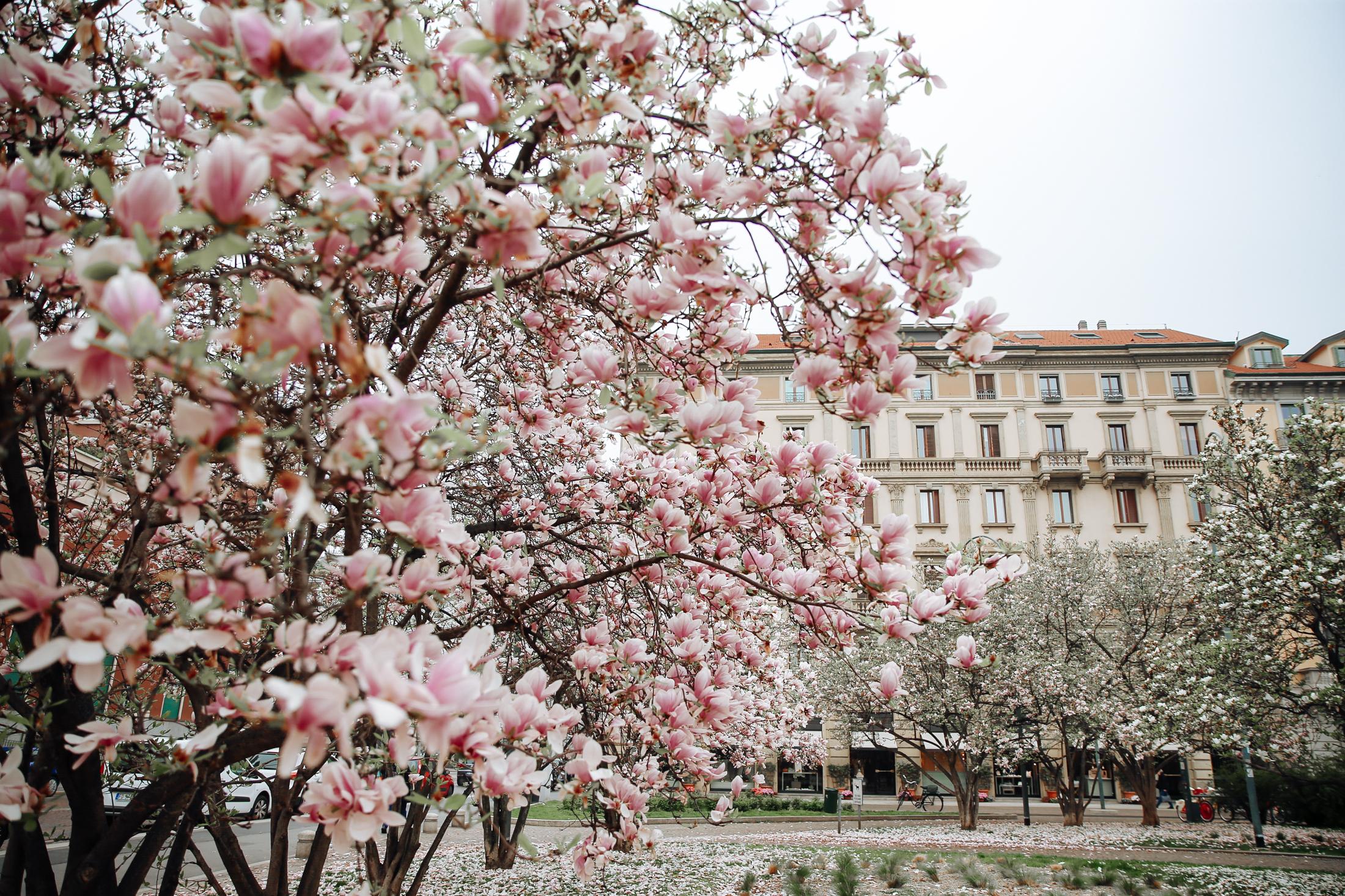 spring-blooms-milano-6691