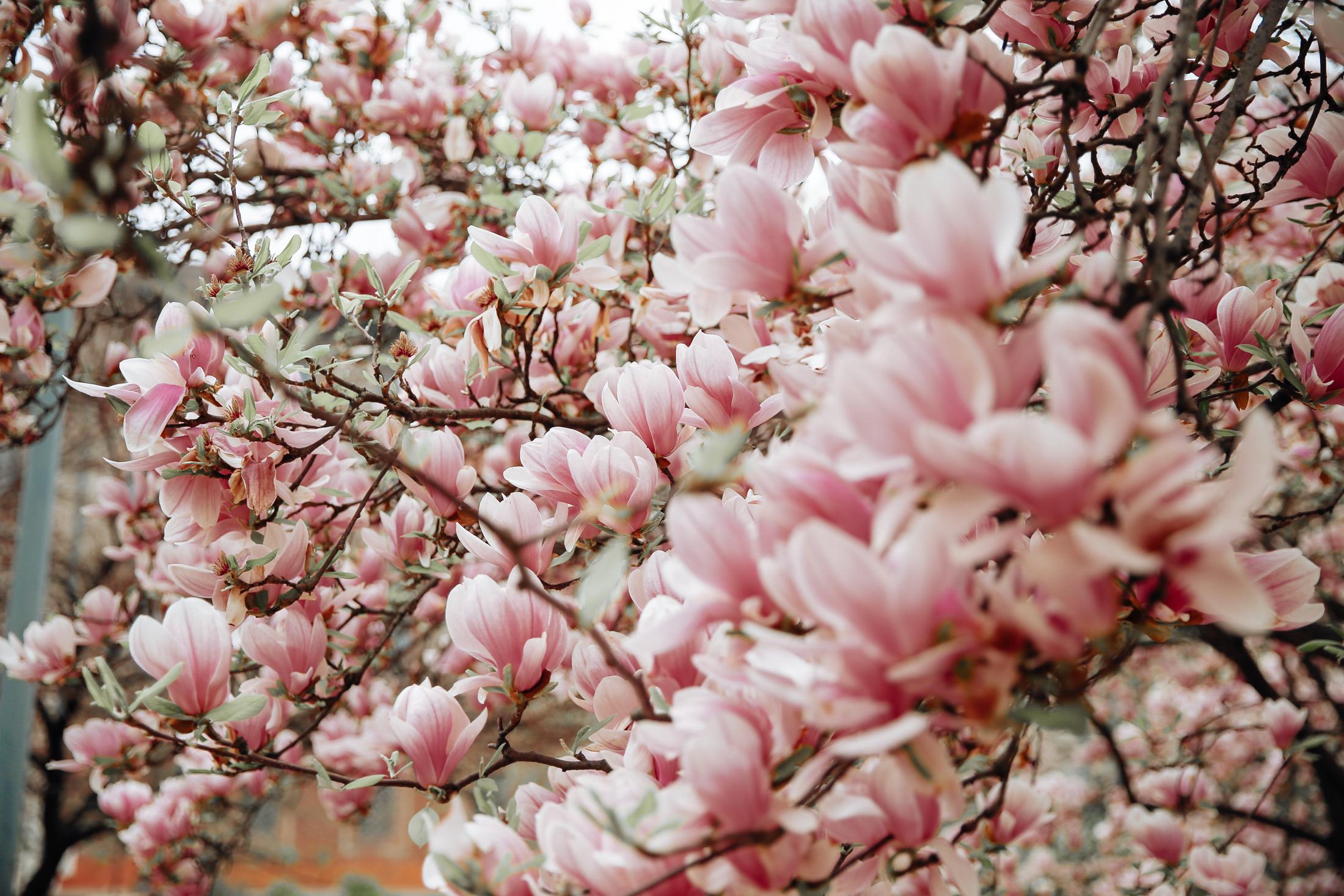 spring-blooms-milano-6693
