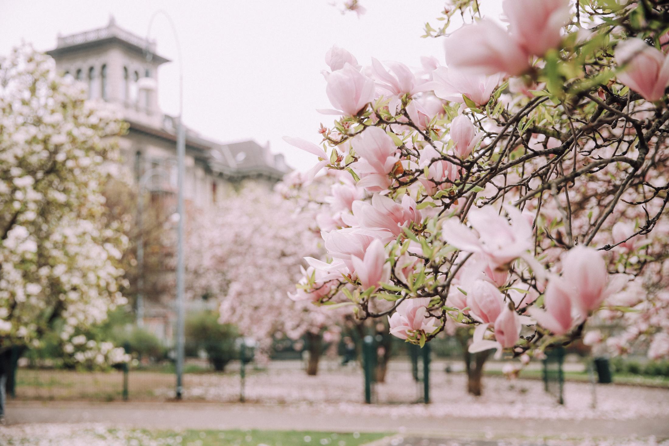 spring-blooms-milano-6935