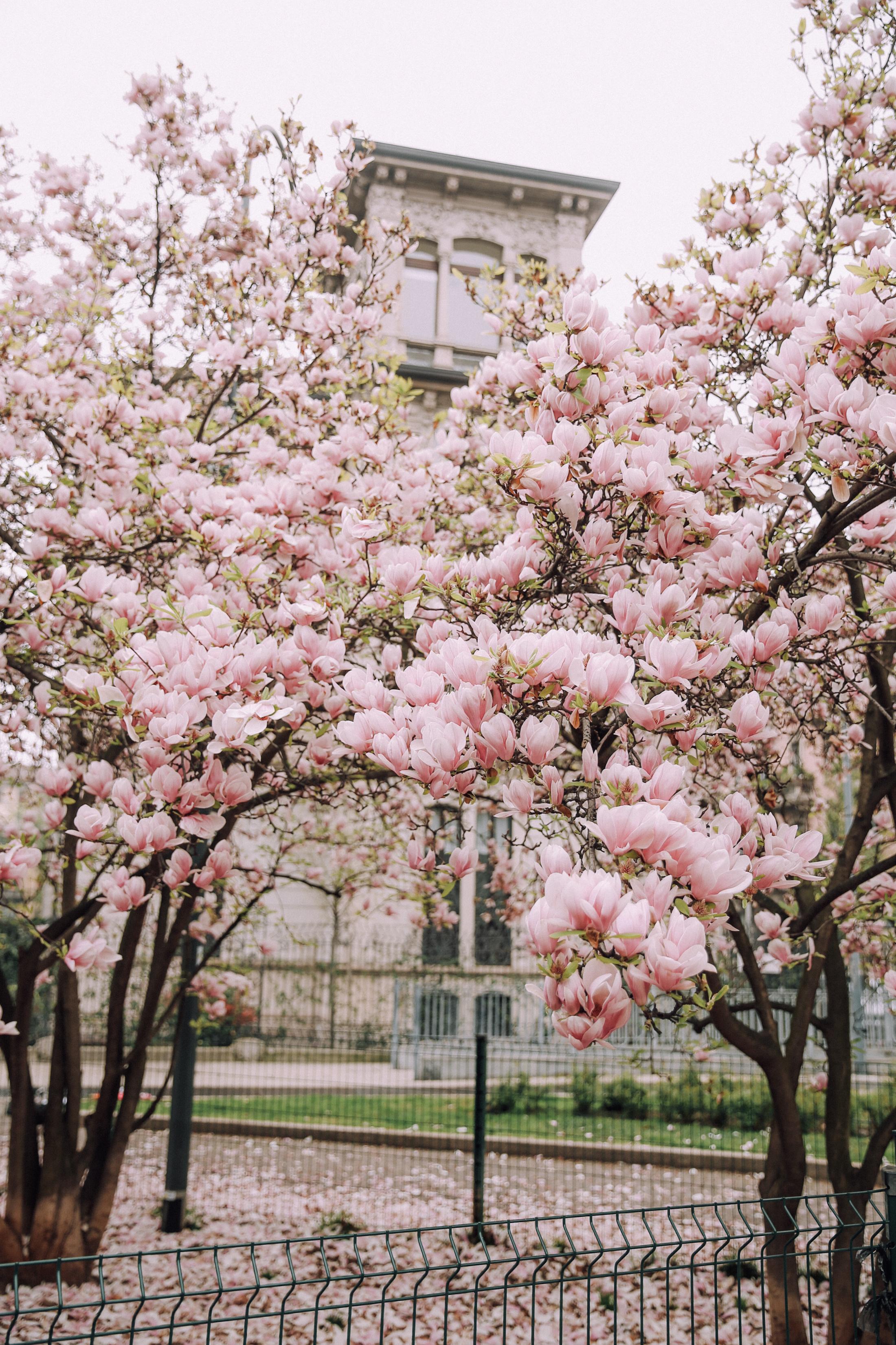 spring-blooms-milano-7115