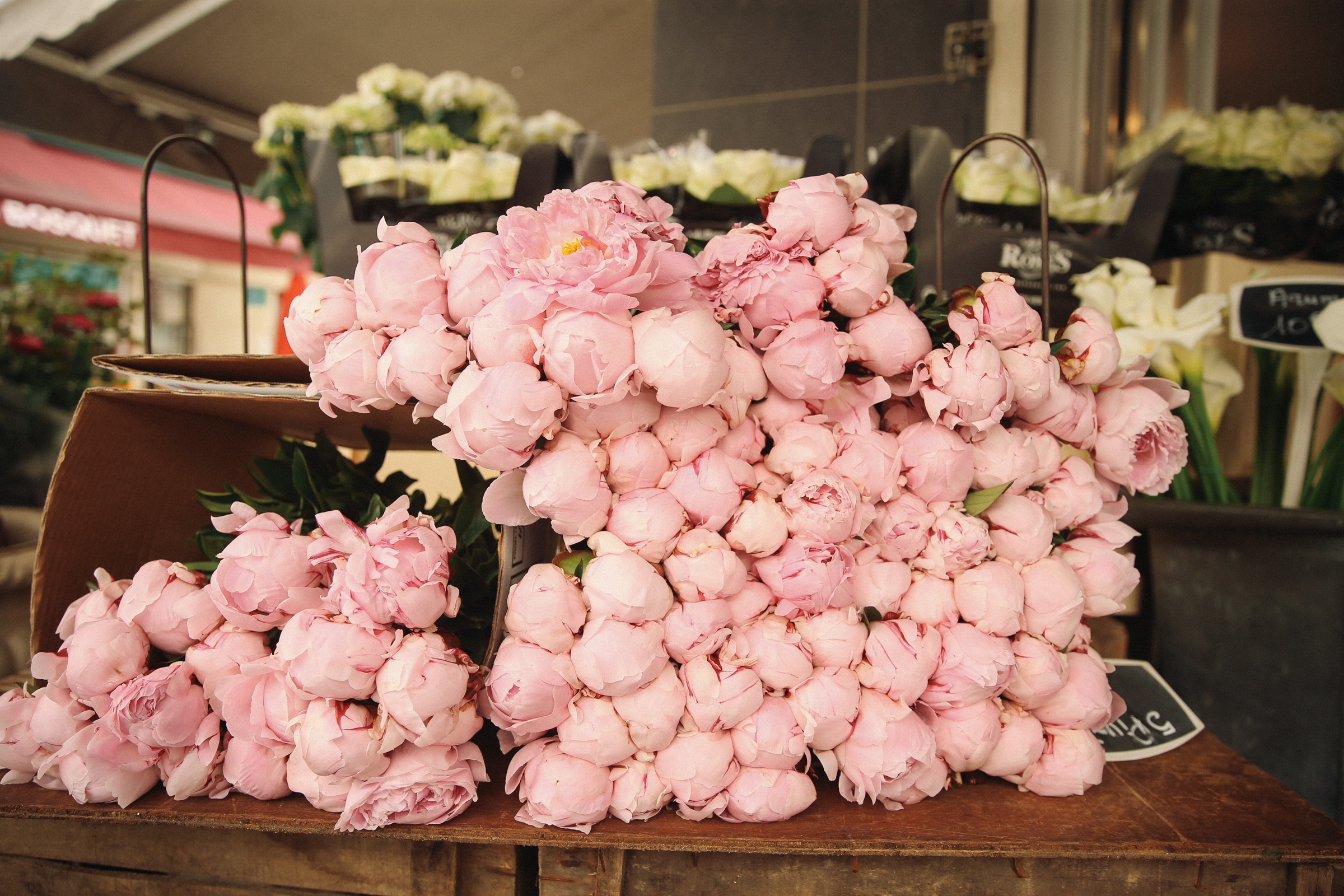 angystearoom-paris-peonies-7486
